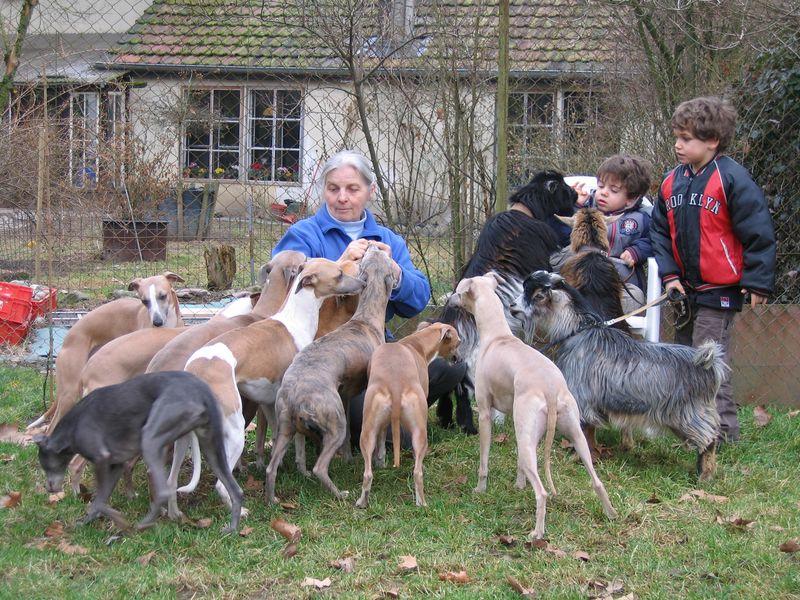 Madeleine avec ses whippets, ses petits-enfants et ses chevres naines
